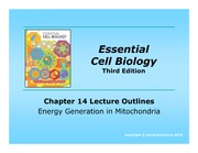 Lecture8_Mitochondria_Notes_A