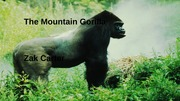 The Mountain Gorilla, Student Created