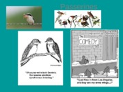 Lecture on Passerines