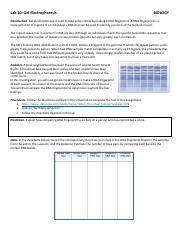 Gel Electrophoresis Virtual lab wksht classzone.docx ...