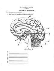 Fast Map the Human Brain Part a