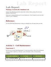 lab_report_genetically_modified (1).doc