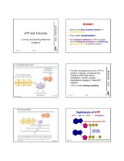 Week 1, Lecture 2, ATP and Enzymes