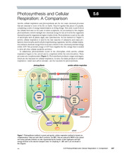 5.6 Photosynthesis and Cellular Respiration - A Comparison - 5.6 ...