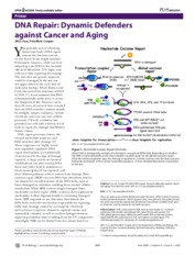 Cancer and DNA repair