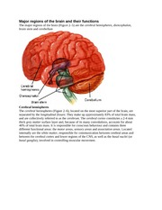 Major regions of the brain and their functions