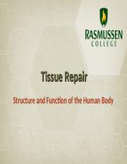 Tissue Repair.ppt
