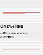Connective_and_Other_Tissues