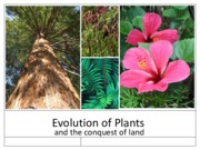 Biology 2108 Plant Diversity, Evolution, and Reproduction
