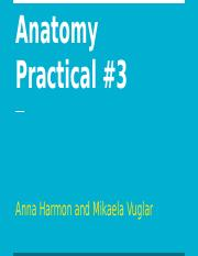 Anatomy and Physiology 1 - Practical #3.pptx