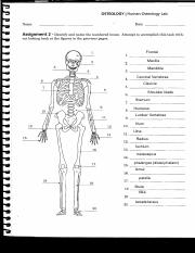 Bone Lab Assignment answers(1).pdf