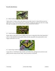 Butterfly ID Outline.rtf