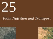 Ch25 Lecture Plant Nutrition and Transport