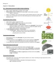 Ch 10 - Photosynthesis.docx