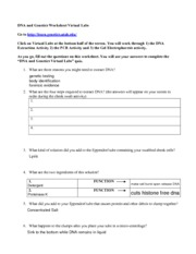 Virtual Labdnaworksheet Dna And Genetics Worksheet Virtual Labs Go To Http Learn Genetics Utah Edu Click On Virtual Labs At The Bottom Half Of The Course Hero