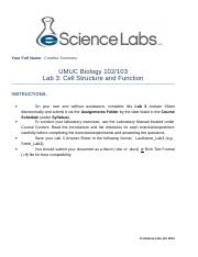 Summers_Lab 3_Answer Sheet.doc