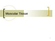 Ch. 10Muscle Tissue