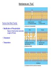 Membrane - Structure and Function I