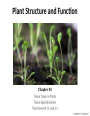 Lecture 7 - Plant Structure and Function EC.pptx