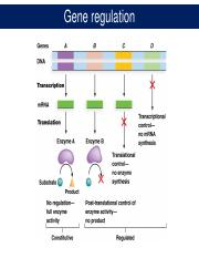 Lecture 20 Regulation of gene expression - prokaryotes.pdf