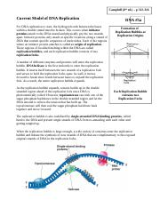 Notes 5a -  DNA Replication