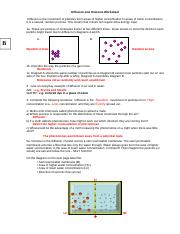 Diffusion And Osmosis Worksheet Key 08 Diffusion And Osmosis
