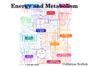 Lecture 8 Energy and Enzymes