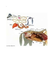 horse_digestive_system