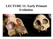203Lecture11 EarlyPrimateEvolutionWhite