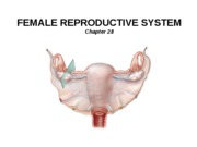 23_Female Reproduction