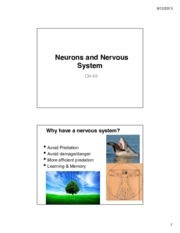 Neurons and Nervous system CH 39.pdf