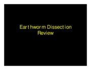 -- Dissected Earthworm --