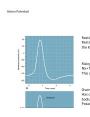 Action Potential.pdf