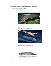 SYSTEMATIC ICHTHYOLOGY STUDY AID - PART 2