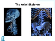 04_Skeletal_System_Axial_Skeleton