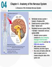 Ch 04-Anatomy of the nervous system.ppt