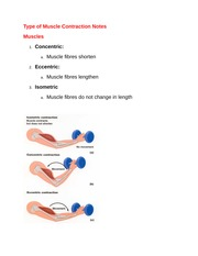 Type of Muscle Contraction Notes