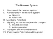5 Nervous System 4 Synapses and Neurotransmitters, Postsynaptic Potentials and Integration