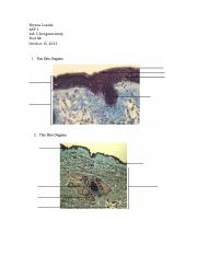 A&P lab 5 integumentary post lab-2