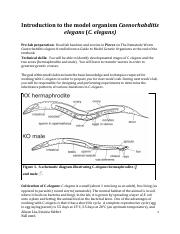 Introduction_to_Celegans.pdf