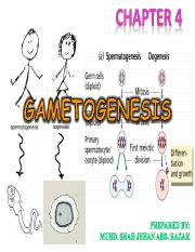 CHAPTER 4 - GAMETOGENESIS - SPERMATOGENESIS