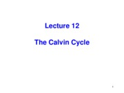 Lecture 12 - 013111