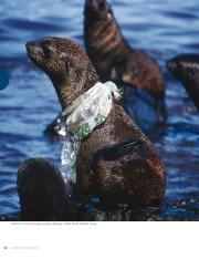 plastic_debris_in_the_ocean