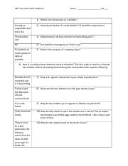 Sex in the wild dolphins PBS  video  worksheet.docx