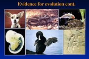 P10-Lecture 4- Evidence of Natural Selection- Feb.1