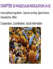 Bacterial communication.pptx