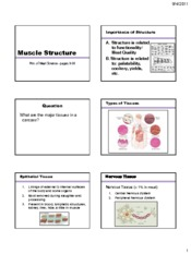 6 Muscle Structure-Tissue types