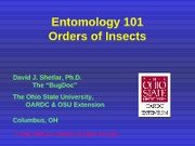 Ent101_Insectorders_blue_c