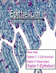 2 Epithelium I.ppt
