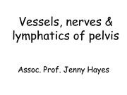 8.3 Pelvic vessels and nerves for ANAT30008, 2014